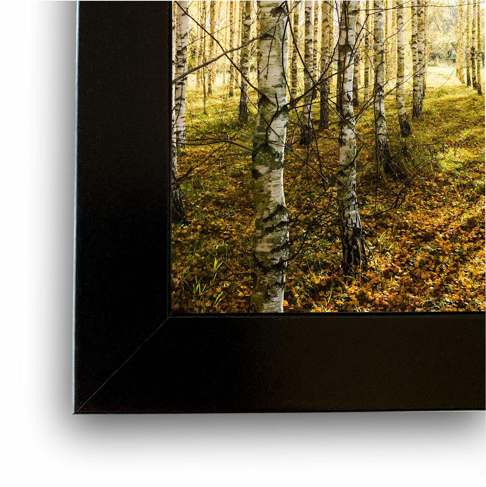 fotografia las brzozowy rama