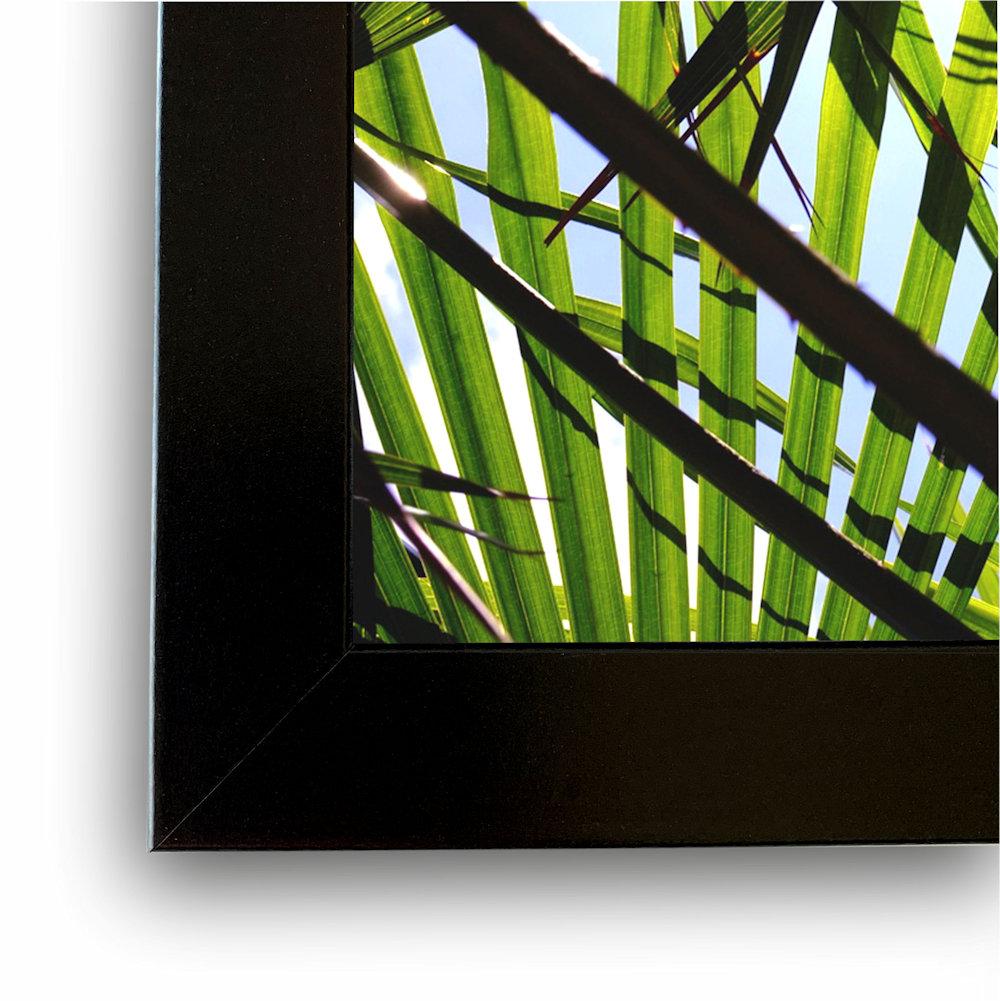 fotografia liści palm rama