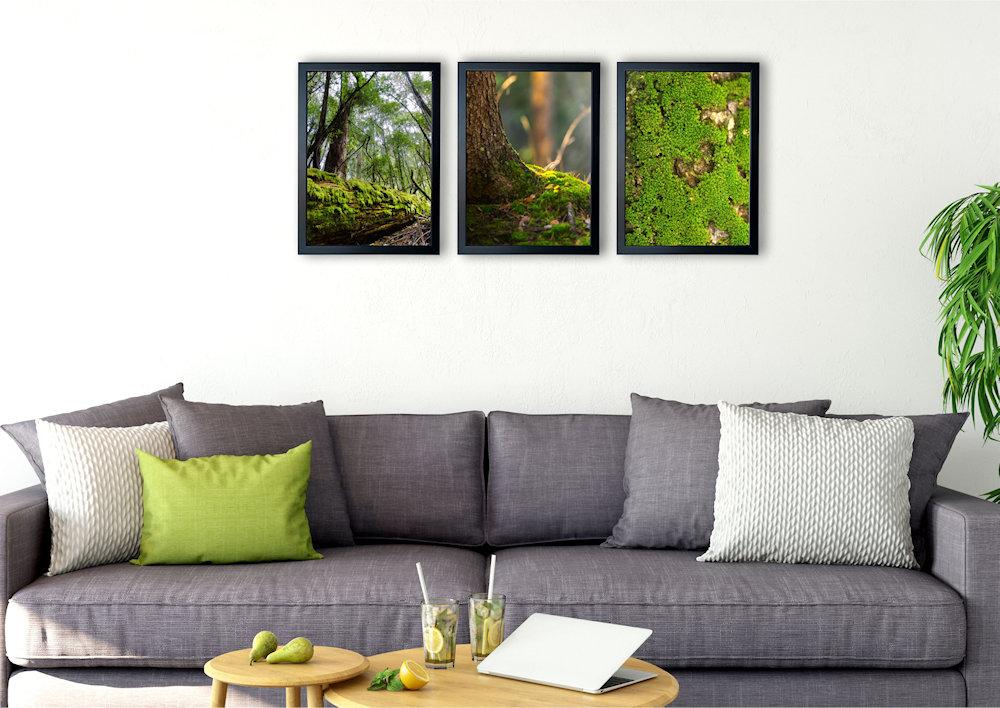 Obrazy mech drzewny nad kanapą